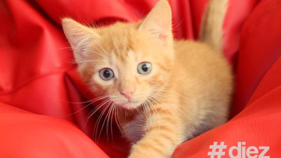 Top 5 pisici ale vedetelor autohtone