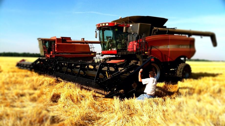 Indicele creșterii prețului grâului e de 43%