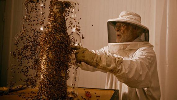 (foto) Albinele sculptează în 3D