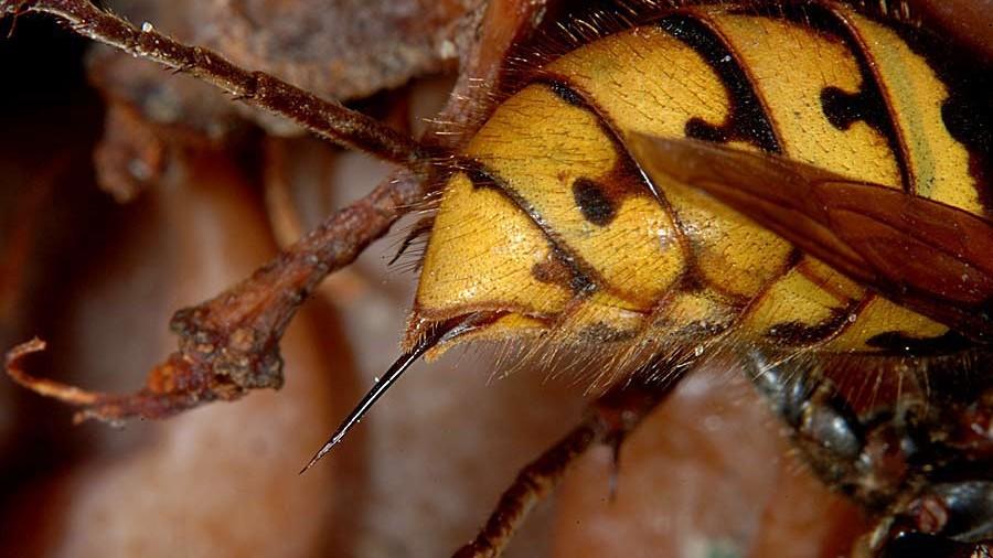 Un pădurar a decedat după ce a fost înțepat de viespi