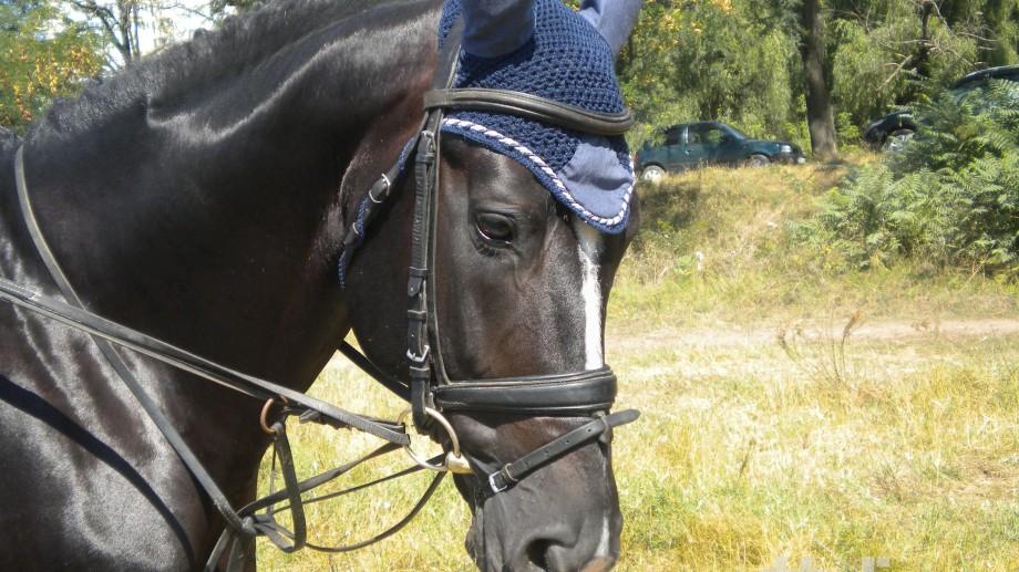 (foto) Cum să coafezi un cal. Idei de la Cupa la hipism