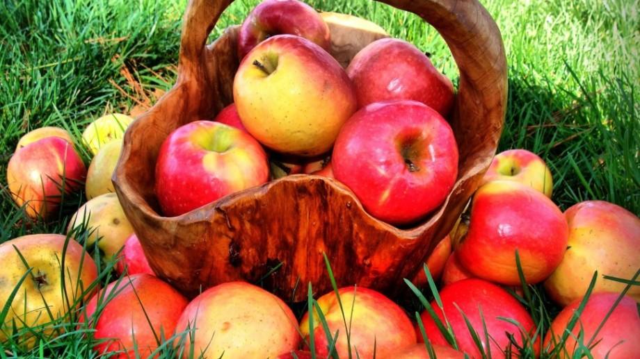 Rusia a întors înapoi în RM 20 de tone de mere