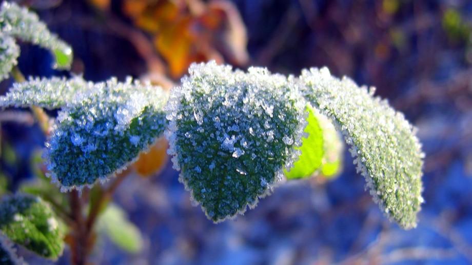 De sâmbătă, există risc de îngheț la sol