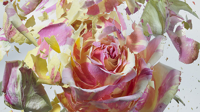 (foto) Explozii florale de la Martin Klimas