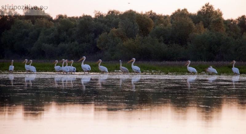 (foto) În căutarea pelicanilor moldoveni împreună cu bunica din Văleni