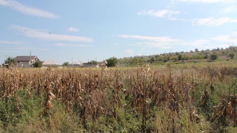 Un bărbat din Țânțăreni a fost omorât și aruncat în câmp. Doi tineri reținuți