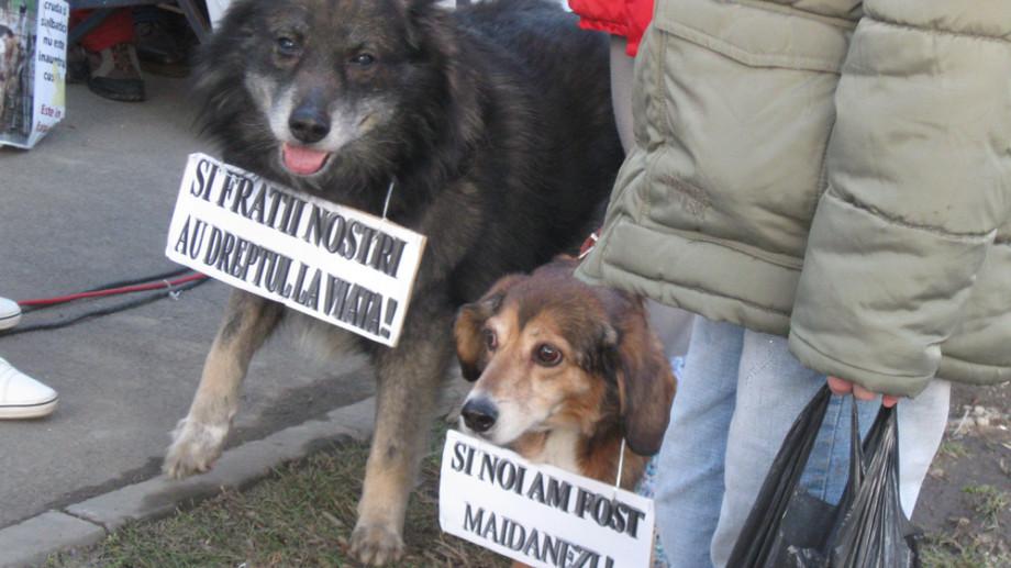 Belgienii sunt împotriva eutanasierii câinilor români