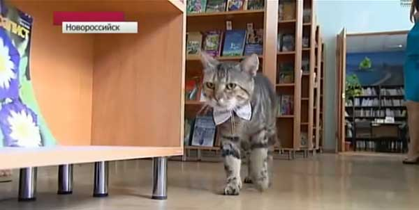 (video) Kuzya din Novorossiysk e primul pisoi bibliotecar