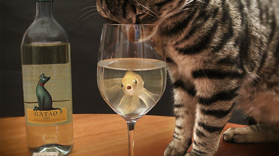 A fost inventat vinul pentru pisici