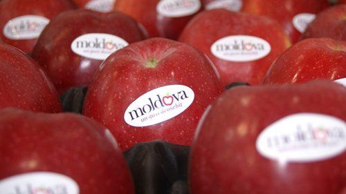 Fructele din Moldova spre piețele din Uniunea Europeană