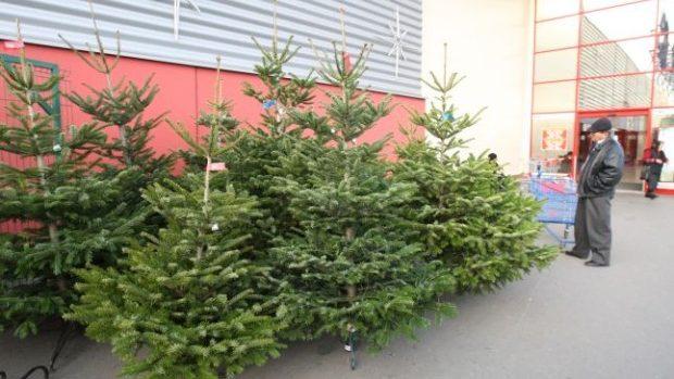 Brazii de Crăciun, mai scumpi decât anul trecut
