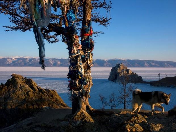 """Pelerini din toată Asia Centrală vin lângă Lacul Baikal, din Siberia, pentru a aduce diverse ofrande și pentru a se ruga la """"Copacul Mamă"""", considerar simbol al vieții veșnice  PC: travel.nationalgeographic.com"""