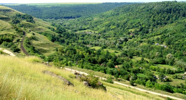 În următorii patru ani suprafeţele împădurite vor fi extinse cu 13 mii hectare
