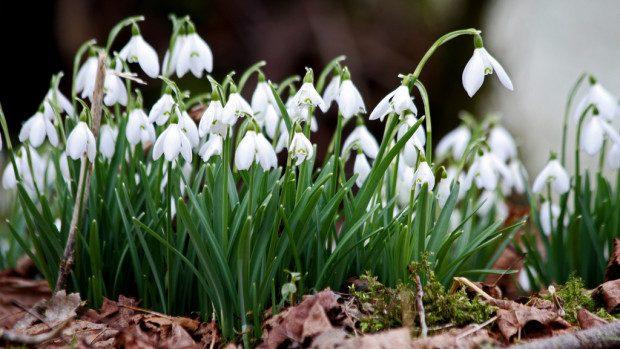 Recomandări cum să-ți petreci ziua de joi, 6 martie
