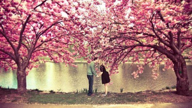 (foto) În Japonia s-a deschis oficial sezonul cireșilor în floare