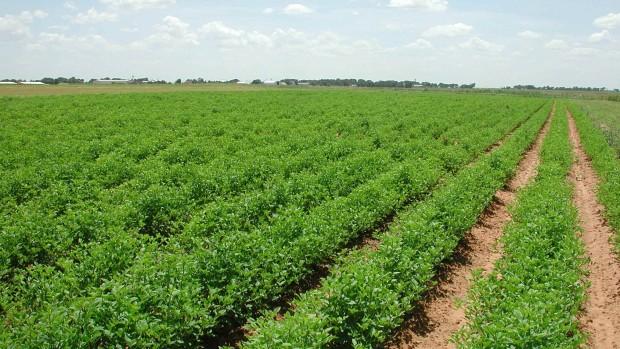 Fermierii moldoveni vor putea exporta produse în UE în toamna anului curent