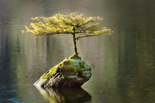 O insulă de viață © Ian Beveridge