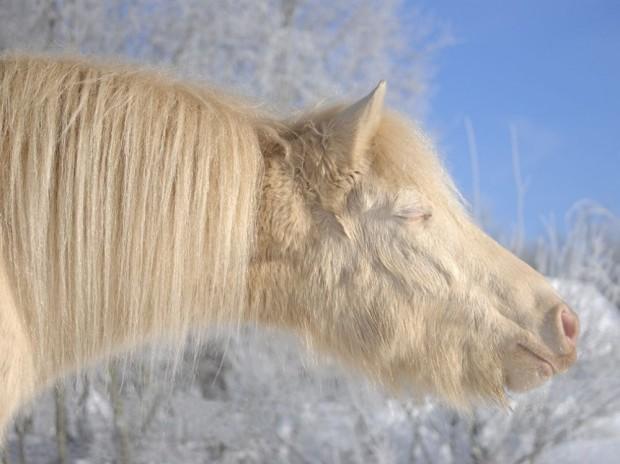 5202655-R3L8T8D-1000-pony-estonia_78541_990x742