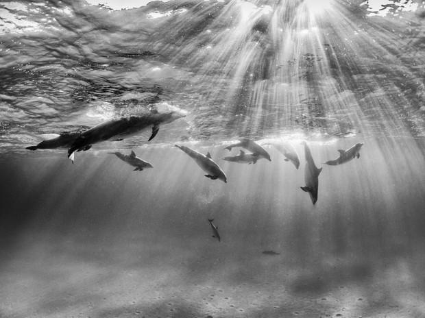 Jocul delfinelor PC: © Nadia Aly