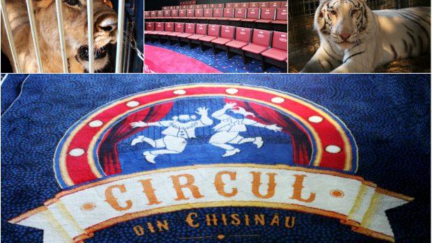 (foto) După un antract de un deceniu, Circul din Chișinău își redeschide ușile cu un show spectaculos