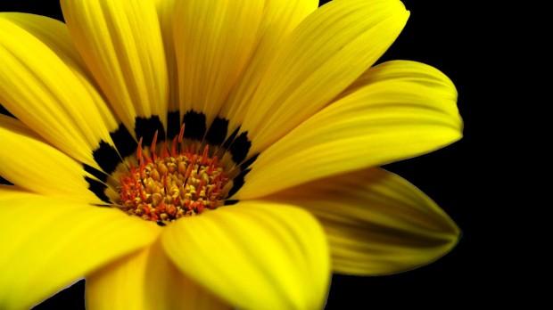 yellow-color-fresh