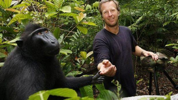 (foto) Selfie-ul maimuței a creat dispute între proprietarul aparului foto și Wikipedia