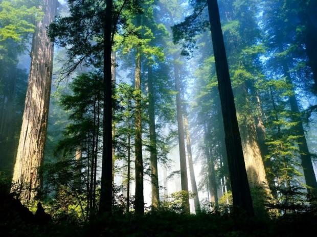cropped-aero_woods4