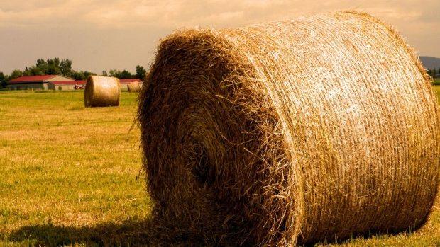 Douăzeci și cinci de școli și grădinițe din țară vor fi încălzite cu biomasă