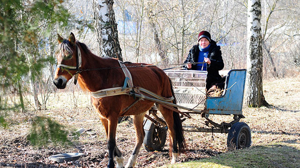 O profesoară din Nordul Moldovei face zilnic naveta cu brișca la școală