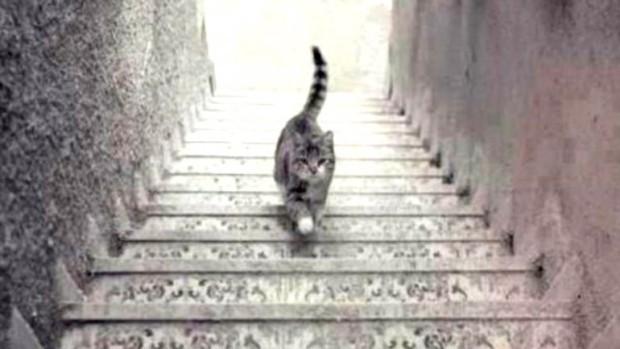 Dilema internauților: Pisica urcă sau coboară această scară?
