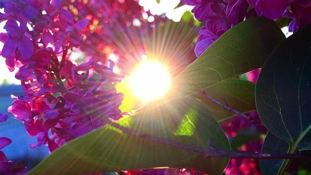(foto) Trend de primăvară: Flori de liliac, îți aduc un like
