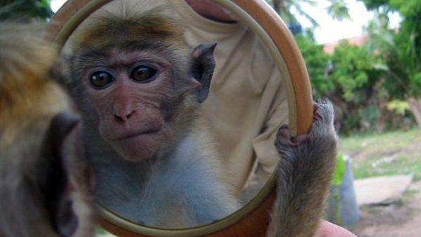 (foto, video) Reacția ciudată a animalelor care s-au văzut pentru prima dată în oglindă