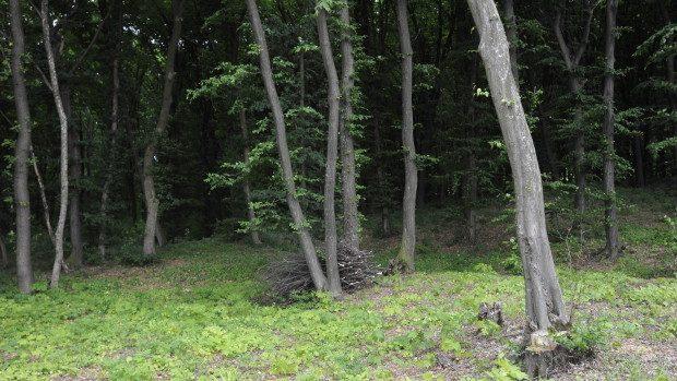 (foto) Pădurea din Boghenii Noi administrată după model european