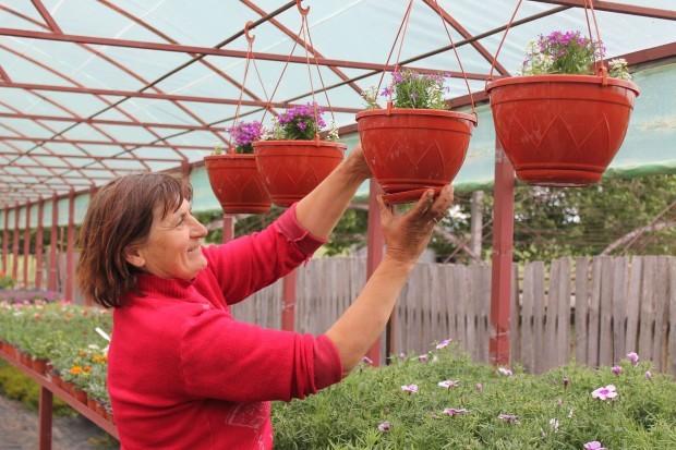 Ana Bulat, prietena Valentinei, ajută la aranjarea florilor în ghiveci