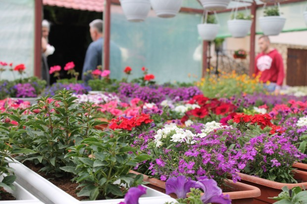 Cumpărătorii își aleg flori din seră