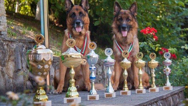 (foto) Ciobăneștii germani ai Poliției de Frontieră au câștigat un concurs internațional