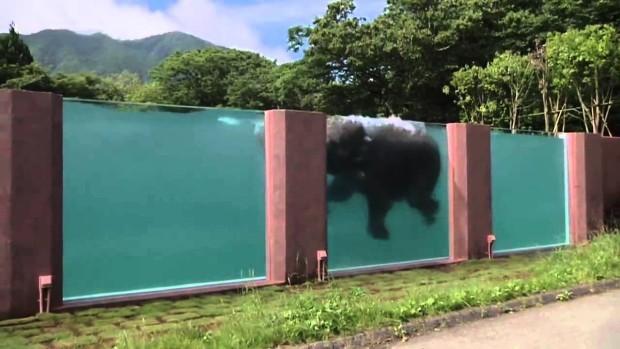 (video) Răsfăț cu mișcări delicate. În Japonia a fost construită o piscină enormă pentru elefanți