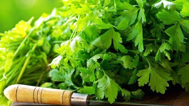 Ce plante aromatice poți crește în grădina de pe pervazul tău