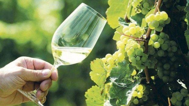 Se extinde lista companiilor vinicole moldovenești care pot exporta în Rusia