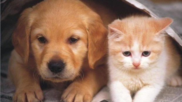 Lista grupurilor de pe Facebook unde poți găsi și adopta un animal de companie