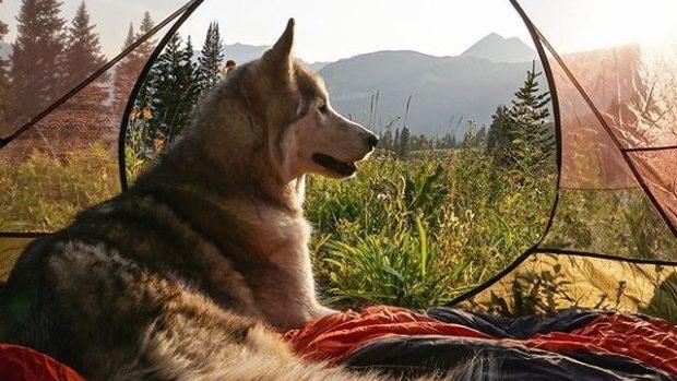 (foto) Contul de Instagram al unui husky care ne inspiră să călătorim frumos
