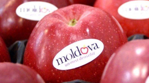 46 de companii agricole din Moldova vor putea exporta fructe în Rusia