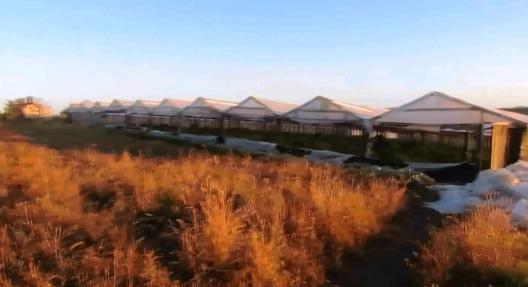 (video) Captură de canabis în valoare de peste 1 milion de euro. Creșteau cânepa în 10 sere