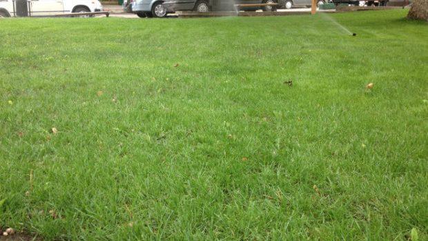 """Peluza din Scuarul Cehov are un nou """"chip"""", menținut cu o mașină de tuns iarba"""