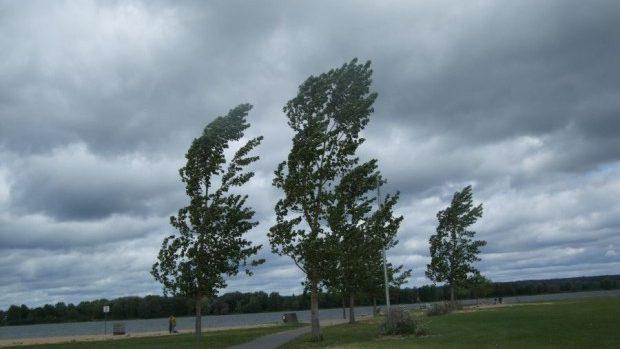 Atenție la copaci! În zilele de luni și marți se anunță cod galben de intensificări ale vântului