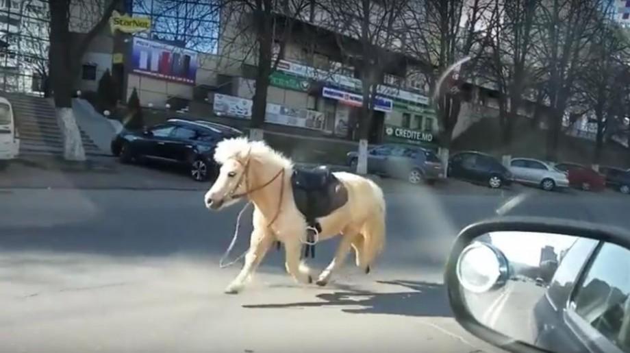 """(video) """"Aleargă calul, aleargă ca mașina"""". Un ponei a ajuns să fie urmărit de polițiști pe bulevardul Moscovei"""