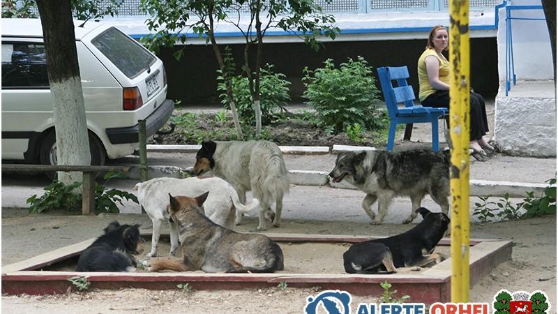 Cu susținerea lui Șor, la Orhei va fi construit primul azil pentru câini maidanezi