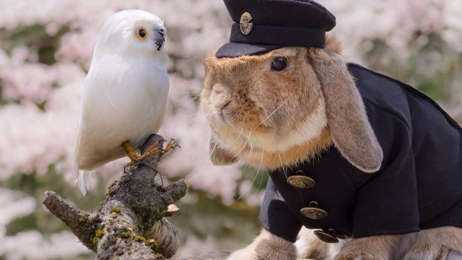 (foto) PuiPui – cel mai drăgălaș iepuraș care a face senzaţie pe Instagram