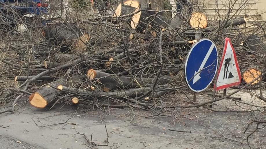 În Chișinău continuă lucrările de curățare și defrișare a arborilor. Adresele vizate