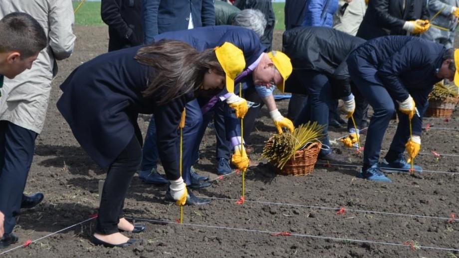 Prima plantaţie de salcie energetică a fost sădită la o şcoală profesională din Orhei